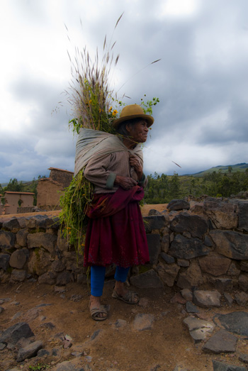 Old Camposino Woman. She shows such strength. (2011) Photo (c) Karen Abrahamson