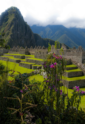 The Orchids of Machu Picchu (2011) Photo (c) Karen Abrahamson